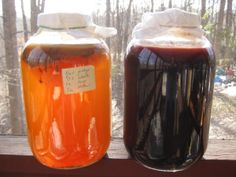 How to: Homemade Gallons of golden and fruity kombucha