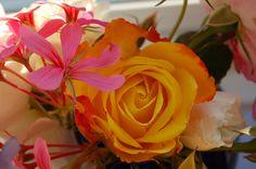 Sussex garden blooms