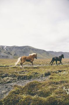Wild horses on a cloudy day Pretty Horses, Beautiful Horses, Animals Beautiful, Cute Animals, Beautiful Places, Wild Animals, Horse Girl, Horse Love, Arte Equina