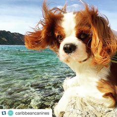 Thanks a lot  #Repost @caribbeancanines with @repostapp.  Gone with the wind  Photo credit: @ffabrix  #nature #sun by ffabrix