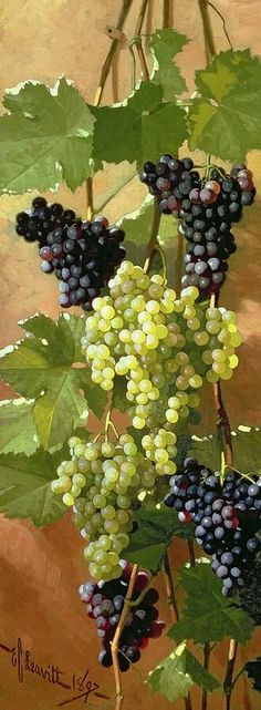 Edward Chalmers Leavitt. Grapes. Still-life. Oil on canvas. 1897.