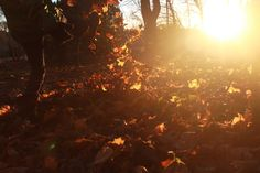 Autumn Photography - One of my favourite photos