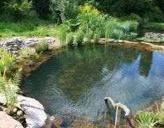 Natural Swimming Pools Enjoy A Natural Swimming Pool In Your Own Yard! Natural swimming pools contain no harmful chemicals or chlorine, they are incredibly low-maintenance, … Swimming Pool Pond, Natural Swimming Ponds, Natural Pond, Pool Spa, Swimming Pool Designs, Swimming Nature, Pond Design, Design Design, Landscape Design