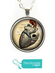 Anatomical Heart Necklace from CellsDividing http://www.amazon.com/dp/B015S3NCQW/ref=hnd_sw_r_pi_dp_k9Ivwb0GV0H9Y #handmadeatamazon