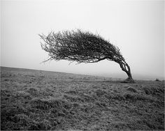 """.This pic makes me think of a line from  a """" Fine Frenzy"""" song ....""""Hope For The Hopeless"""".............like a willow bending in the storm you'll make it."""