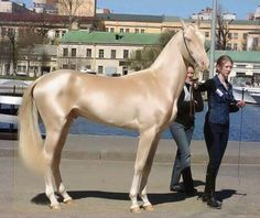 The Most Beautiful Horse In The World! The Akhal-Teke one of the oldest surviving horse breeds from Turkmenistan. Only about 3,500 are left worldwide. Known for their speed & famous for the natural metallic shimmer of their coats.
