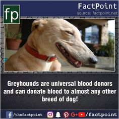 """468 Likes, 1 Comments - Fact Point (@factpoint) on Instagram: """"Universal blood Donor breed """""""