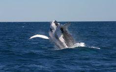 Australia (whale watching)