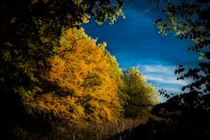 Different autumn - A little bit different view of autumn.
