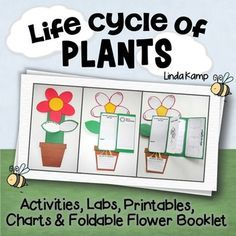 Loaded with over 20 creative and engaging, hands-on science and writing activities incorporating 4 plant mini-labs, reading comprehension, art, thinking maps, content vocabulary, assessment, along with anchor charts and lesson visuals to supplement or use as a stand-alone unit for teaching the life cycle of plants. Get your students writing about science as they complete a culminating project perfect for assessment by displaying their thinking and learning with a foldable flower booklet.