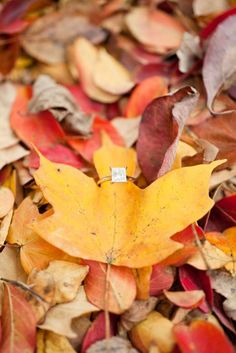 Snap some photos of your beautiful engagement ring on a bed of fall leaves.