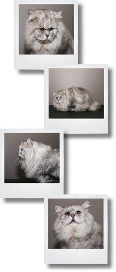 Welkom bij honden & katten Trimsalon Snuit. Hier vindt u alle informatie over onze salon en werkwijze. Zowel lang- als kortharige katten en honden zijn bij