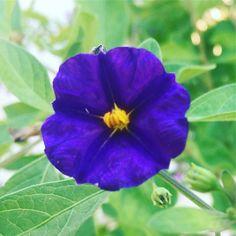 #flowersofcyprus #plantsofcyprus #colorsofcyprus #livinginparadise #begrateful #seieinheld #lebeseelischeidentität Die Natur gibt mir Balance! Was erdet Dich in Deinem Leben? Was bringt Dir die Ruhe?
