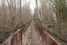 Cronomirajul – un fenomen întâlnit în cea mai înspăimântătoare pădure din Rusia