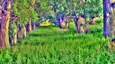 My edit of a tree row :)