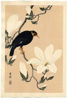 ozilot:  Artist: Hoson Title: Myna Bird on a Branch Medium: Original Japanese Woodblock Print http://www.castlefinearts.com/search_results_detail.php?pageno=25&searchArchives=&searchByArtist=161&recordsPerPage=&pn=2&rpp=30