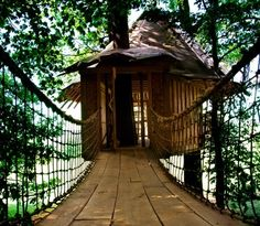 A suspended bridge is now the latest craze in backyard forts and tree houses. Maybe it's because of the rising popularity of Costa Rica as a vacation destination? I am not sure what brought this on, but it is in all the cool backyards right now.