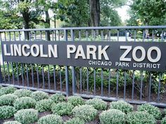 Lincoln Park Zoo, Chicago So Many good memories had here!!