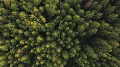 Beides! Heizen mit Stückholz ist unschlagbar billig und krisensicher. Es ist überall in der Nachbarschaft vorhanden. Aber auch die Ökobilanz von Pellets kann sich sehen lassen. Heizen mit Pellets ist bequem weil man sich um nichts kümmern muss. In Kombination sind Pellets und Stückholz einfach unschlagbar, was Heizkosten, Komfort und Umweltverträglichkeit betrifft. Komfort, Herbs, Plants, Simple, Timber Wood, Herb, Plant, Planets, Medicinal Plants