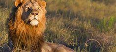 Afrique du sud : Le parc national Kruger et Kwazulu natal, en famille un voyage proposé par Véronique agent local en Afrique du Sud