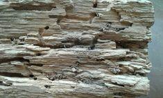 Active Death Watch Beetle Beetle, Mother Nature, Death, Homes, Shape, Wood, June Bug, Houses, Woodwind Instrument