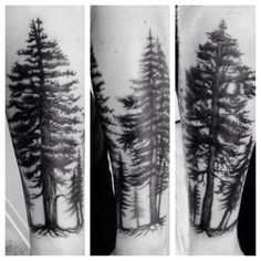 Redwoods on forearm by Jessica at Illuminati tattoo in Santa Cruz, CA.