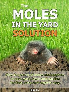 Moles are highly destructive and can ruin a garden and lawn use the moles in the yard solution how to get rid of moles and gophers in your yard the fast easy and organic way by j ochs 671 solutioingenieria Images
