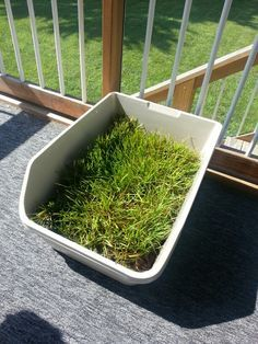 Real Grass Sod Dog Potty Or Litterbox DIY. Step 1  Get Two Jumbo Cat