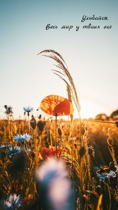 One of many great free stock photos from Pexels. This photo is about plants, poppy, sunshine Aesthetic Desktop Wallpaper, Mood Wallpaper, Nature Wallpaper, Screen Wallpaper, Free Photography, Amazing Photography, Photography Website, Instagram Status, Nature Tattoos
