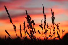 September 2012 sunset in the back garden 02