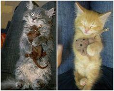 不同的貓但是嗜好一樣...