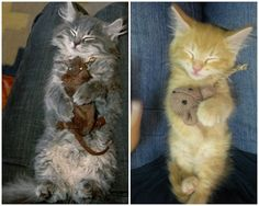 So cute if i get a kitten i will have to buy it a toy mouse...