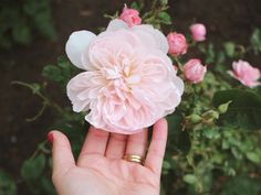 If your garden needs a pop of colour, flower farmer Sarah Nixon shares the best perennials to plant in Canada and how to care for them. Long Blooming Perennials, Best Perennials, Hardy Perennials, Flowers Perennials, D Flowers, Growing Flowers, Amazing Flowers, Planting Flowers, Backyard Trees