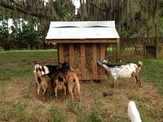 Building a Hay Rack For Goats – Old Man Stino