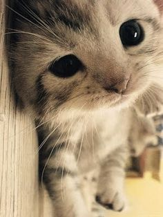 OMG, is this the cutest kitten or what???