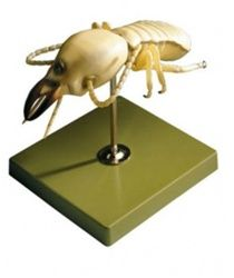 SOMSO Termite Model http://www.gtsimulators.com/product-p/zos49-14.htm