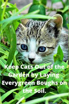 Keeping Cats Out of the Garden