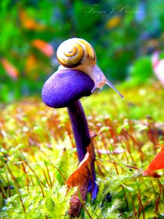 King of the Mushrooms ~ FreyaJC   Artist's note: This little snail was a great model! The mushroom is real.  It is an Amethyst Deceiver.