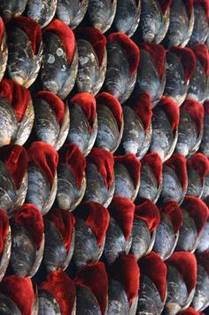 Pallant House Gallery, Chichester  2006/7 mussel shells, red silk velvet essay by Dr Catherine Harper   Back to Images