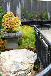 Secret gardens of Asheville.
