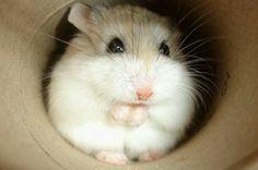 My hamster!