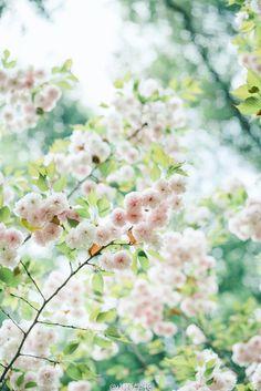 Spring Aesthetic, Flower Aesthetic, Scenery Wallpaper, Nature Wallpaper, Phone Backgrounds, Wallpaper Backgrounds, Love Flowers, Beautiful Flowers, Spring Wallpaper