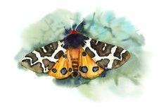 Set of butterflies. by maria.kytyzova on @creativemarket