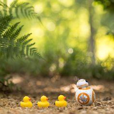 Arielle Nadel hat den Alltag des kleinen Sphero BB-8 festgehalten - KlonBlog