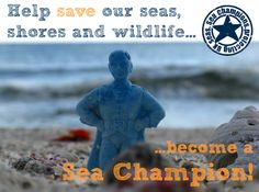 Find out how you can become a volunteer for the Marine Conservation Society