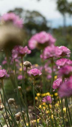 our garden #photography #fowers #fujifilmxt2 #garden