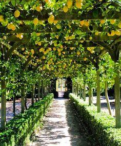 Pergola With Glass Roof Amazing Gardens, Beautiful Gardens, Landscape Design, Garden Design, Backyard Pergola, Pergola Kits, Pergola Ideas, Garden Trees, Garden Structures