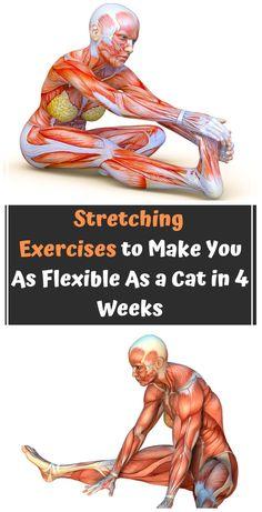 10 Stretching Exercises to Make You As Flexible As a Cat in 4 Weeks ! 10 Stretching Exercises to Make You As Flexible As a Cat in 4 Weeks ! 10 Stretching Exercises to Make You As Flexible As a Cat in 4 Weeks ! Motivation Yoga, Mat Yoga, Pilates Yoga, Pilates Reformer, Yoga Poses, Yoga Sequences, Health Tips, Health Care, Bodybuilding