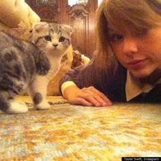 Taylor Swift and her Scottish Fold