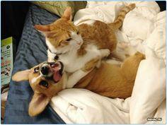 #animal #животные #sleep #собаки #кошки #dog